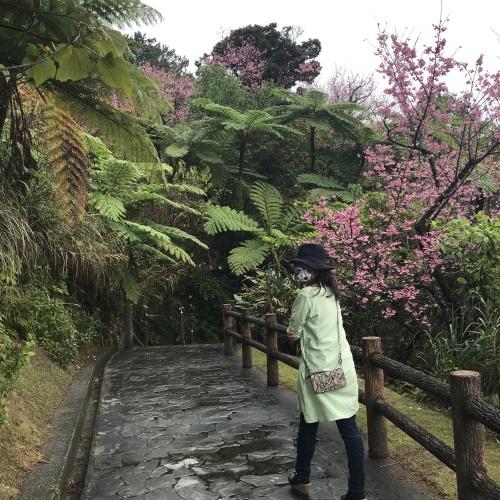 Cherry Blossom seeing._c0153966_19010505.jpeg
