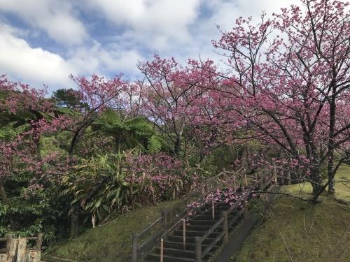 Cherry Blossom seeing._c0153966_19043993.jpeg