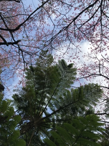 Cherry Blossom seeing._c0153966_19052415.jpeg