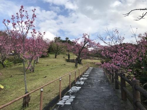 Cherry Blossom seeing._c0153966_19072102.jpeg