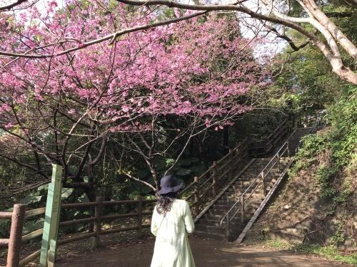 Cherry Blossom seeing._c0153966_19121996.jpeg