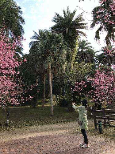 Cherry Blossom seeing._c0153966_19160102.jpeg