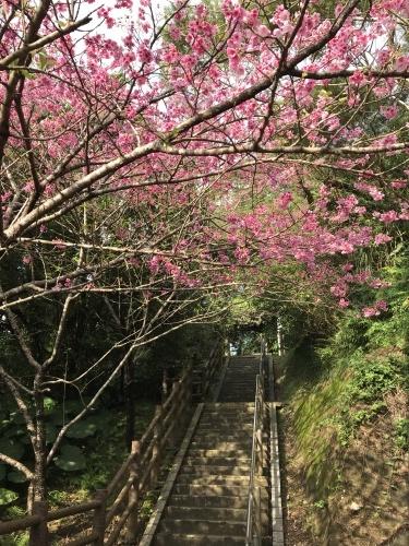 Cherry Blossom seeing._c0153966_19215350.jpeg