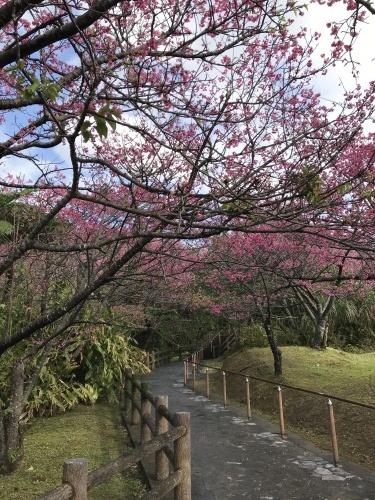 Cherry Blossom seeing._c0153966_19282101.jpeg