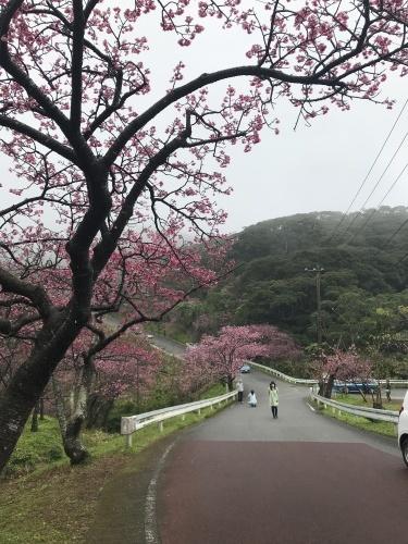 Cherry Blossom seeing._c0153966_19530573.jpeg
