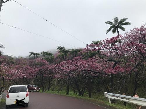 Cherry Blossom seeing._c0153966_19534044.jpeg
