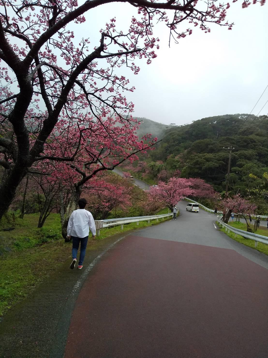 Cherry Blossom seeing._c0153966_21022900.jpeg