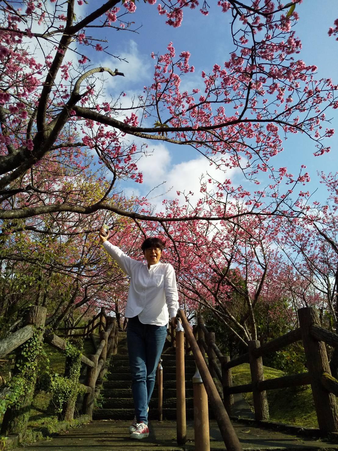 Cherry Blossom seeing._c0153966_21025516.jpeg