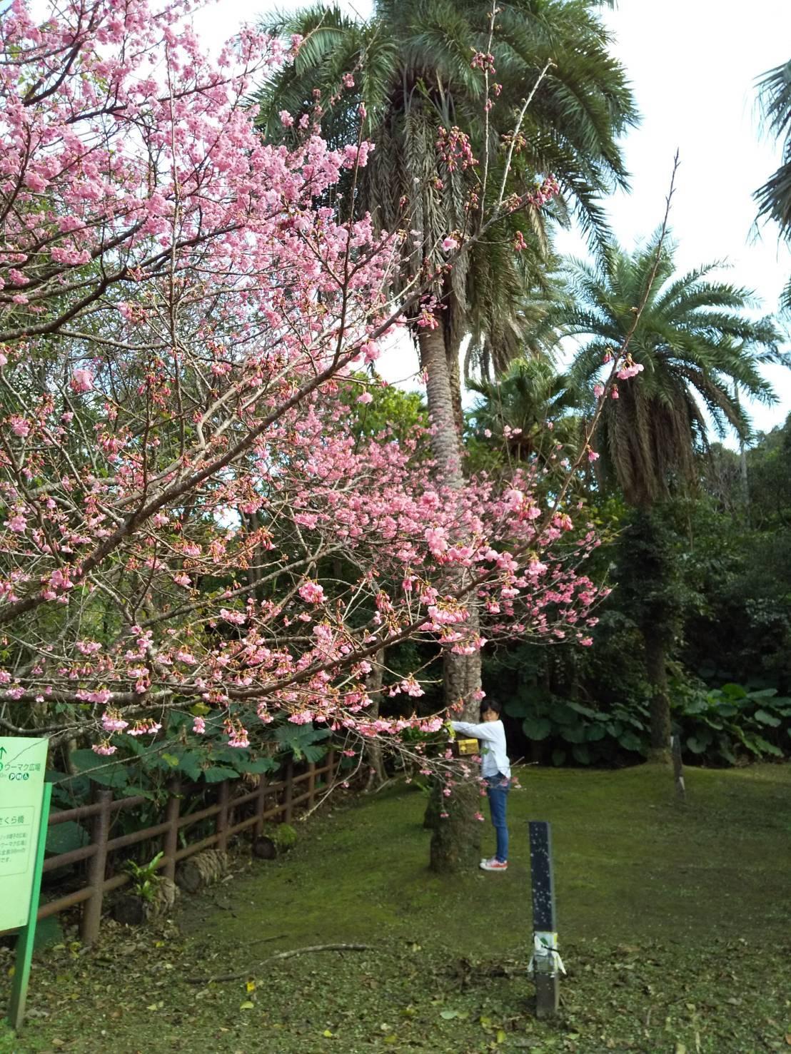 Cherry Blossom seeing._c0153966_21033484.jpeg