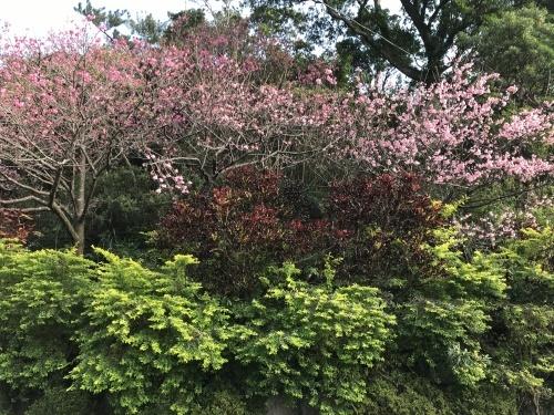 Cherry Blossom seeing._c0153966_21271701.jpeg