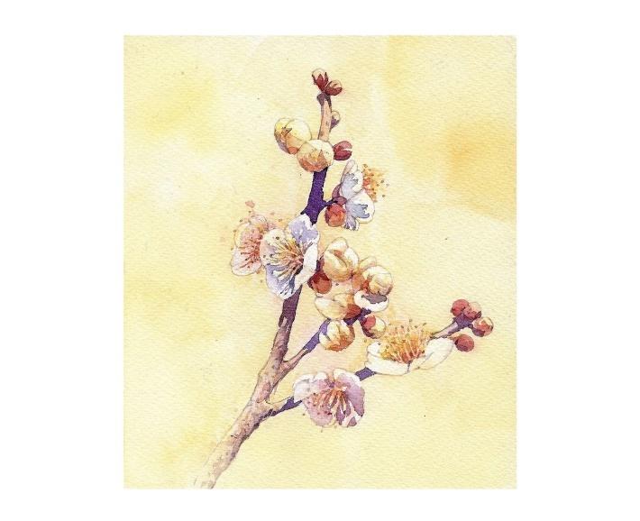 春・一期一会_f0006171_18162788.jpg