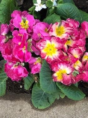 春の息吹_f0061394_14153540.jpg