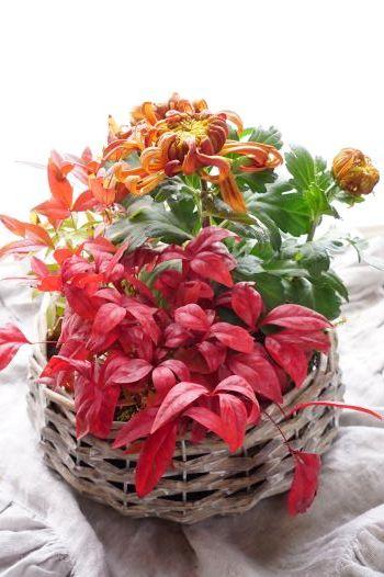 ラッキーカラーのお花を飾りましょう(#^.^#)_b0151911_10584887.jpg