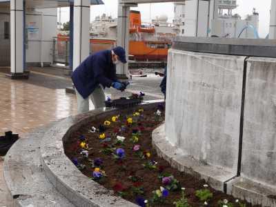 名古屋港水族館前花壇の植栽R3.2.3_d0338682_14363226.jpg