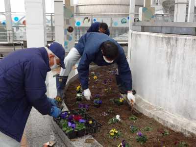 名古屋港水族館前花壇の植栽R3.2.3_d0338682_14370143.jpg