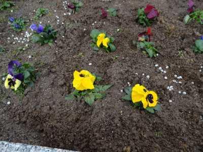 名古屋港水族館前花壇の植栽R3.2.3_d0338682_14381229.jpg