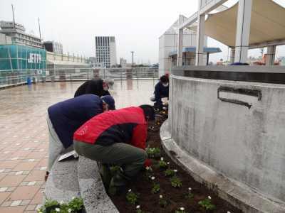 名古屋港水族館前花壇の植栽R3.2.3_d0338682_14402871.jpg