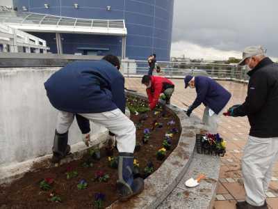 名古屋港水族館前花壇の植栽R3.2.3_d0338682_14410057.jpg