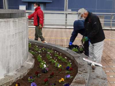 名古屋港水族館前花壇の植栽R3.2.3_d0338682_14414757.jpg