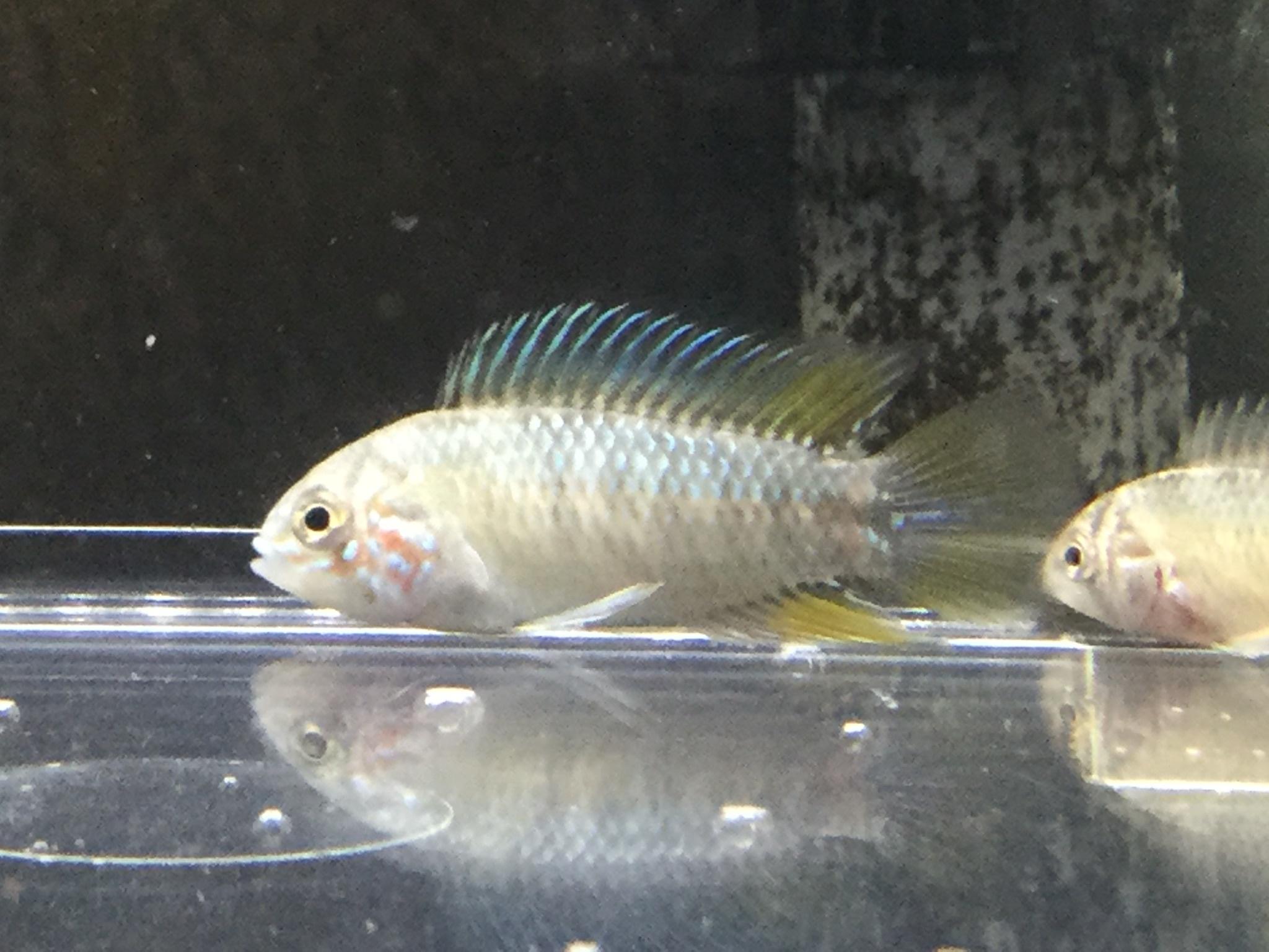 210204 熱帯魚 めだか 金魚 水草_f0189122_12542700.jpeg