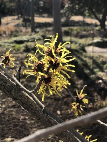 春は黄色から☆_d0028267_16071832.jpeg