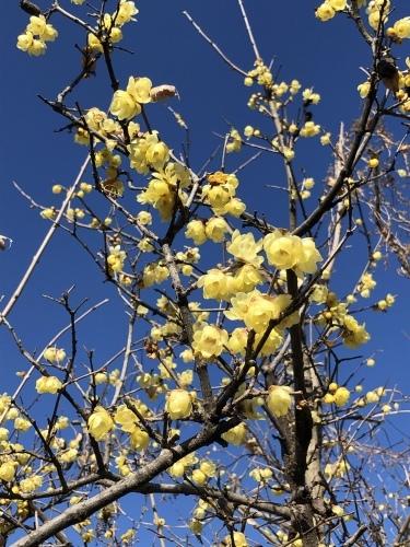 春は黄色から☆_d0028267_16095673.jpeg