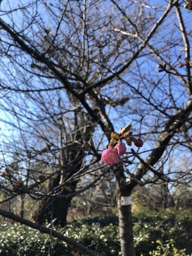 春は黄色から☆_d0028267_16172237.jpeg