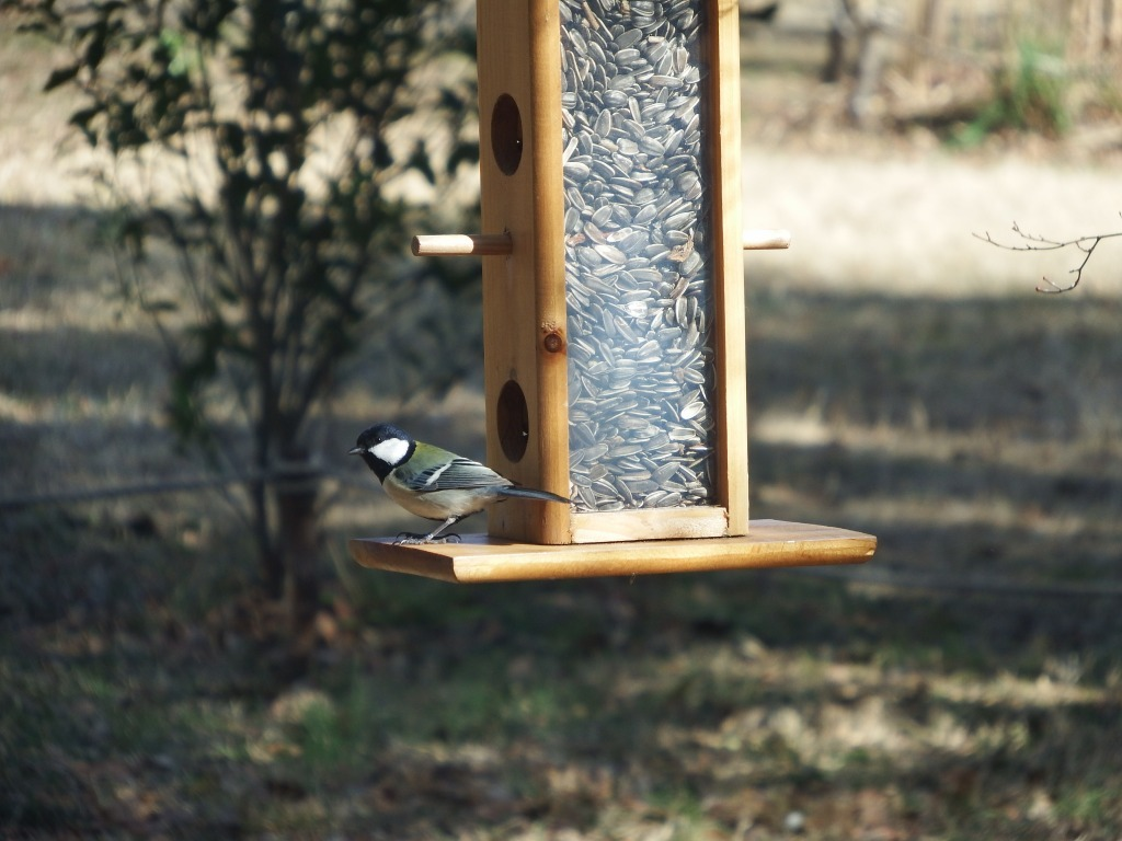 2/20(土)開催 イベント「お家に鳥たちを呼ぼう!」_b0049307_11473989.jpg