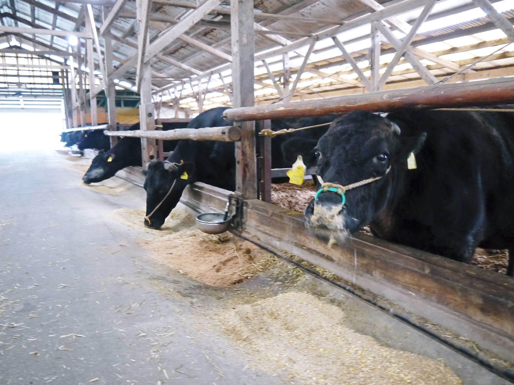 熊本県産の黒毛和牛100%のハンバーグステーキ!数量限定販売中!令和3年2月は17日(水)の出荷です! _a0254656_14543793.jpg