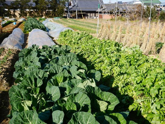 冬野菜  2021-02-07 00:00_b0093754_23091551.jpg