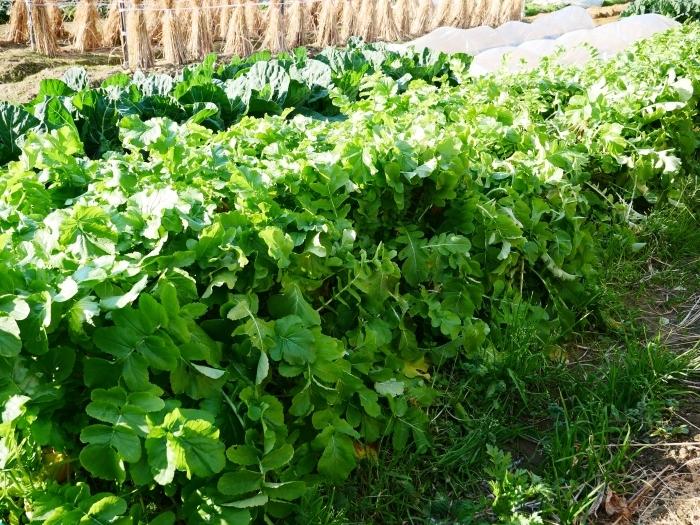 冬野菜  2021-02-07 00:00_b0093754_23101273.jpg
