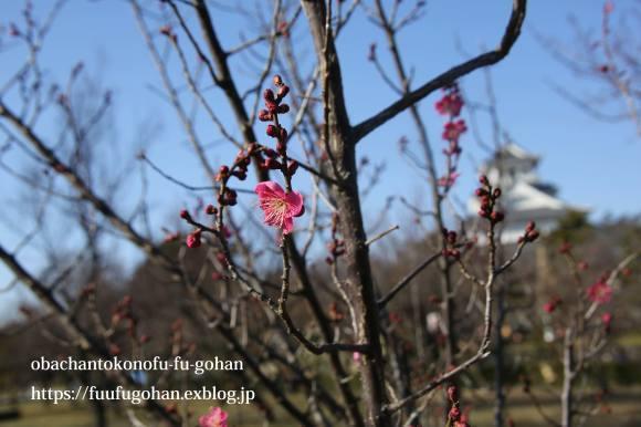 もうすぐ春の琵琶湖散歩&岩崎珈琲さんへ行って来た~(^^♪_c0326245_13150083.jpg