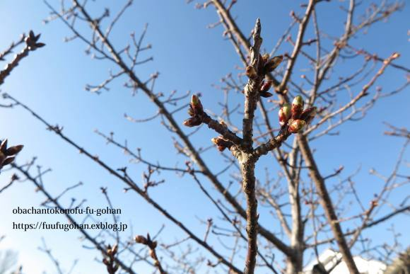 もうすぐ春の琵琶湖散歩&岩崎珈琲さんへ行って来た~(^^♪_c0326245_13190467.jpg