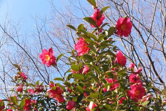 もうすぐ春の琵琶湖散歩&岩崎珈琲さんへ行って来た~(^^♪_c0326245_13202460.jpg