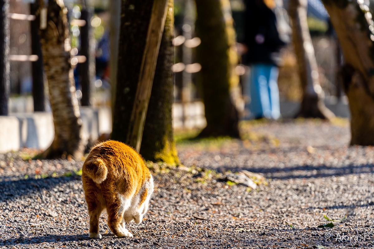 〜岩合光昭に挑戦〜 京都ネコ歩き -26-_f0152550_17240400.jpg