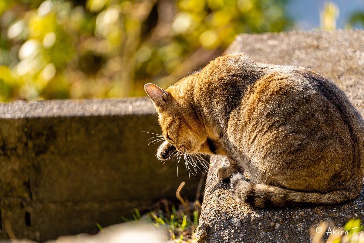 〜岩合光昭に挑戦〜 京都ネコ歩き -26-_f0152550_17241885.jpg