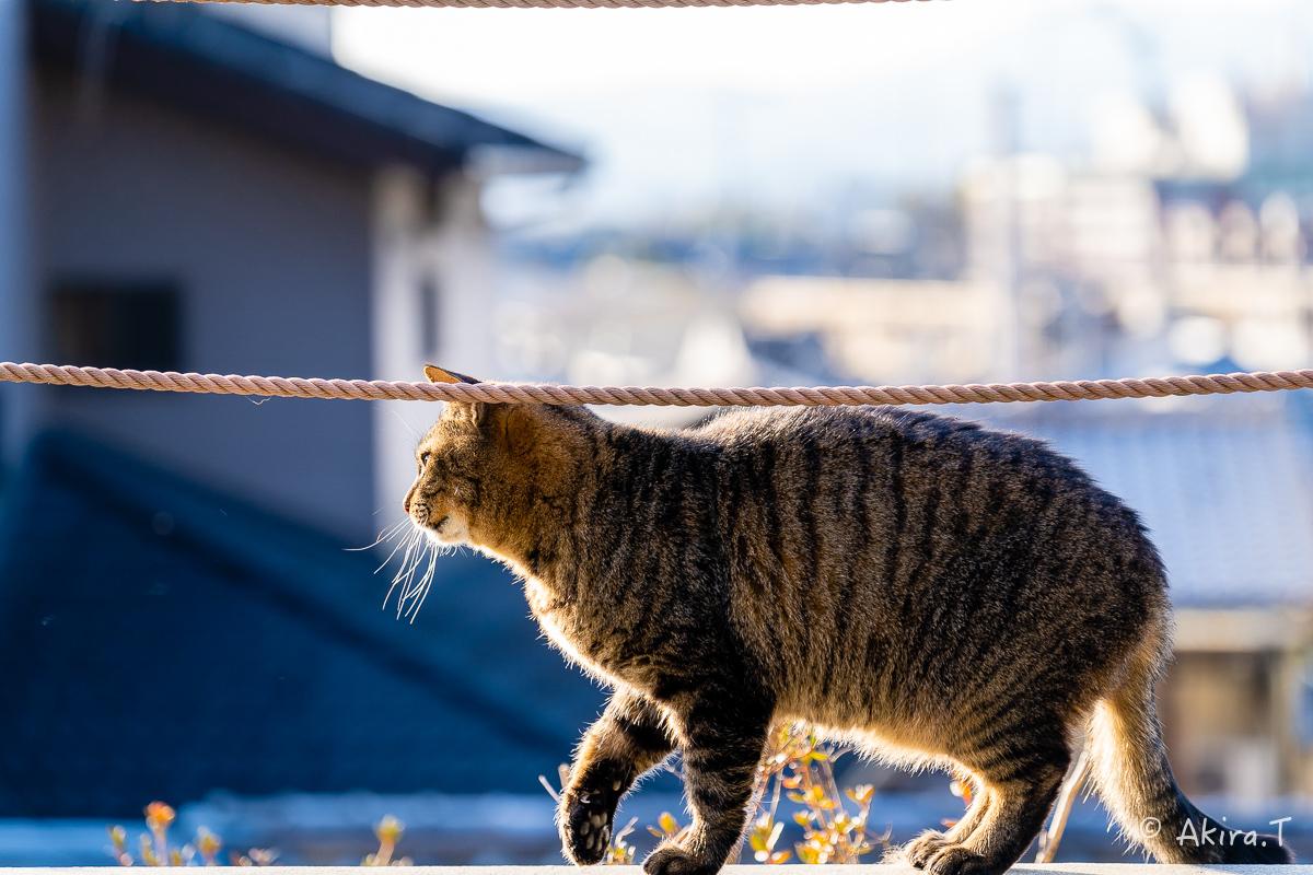 〜岩合光昭に挑戦〜 京都ネコ歩き -26-_f0152550_17263347.jpg