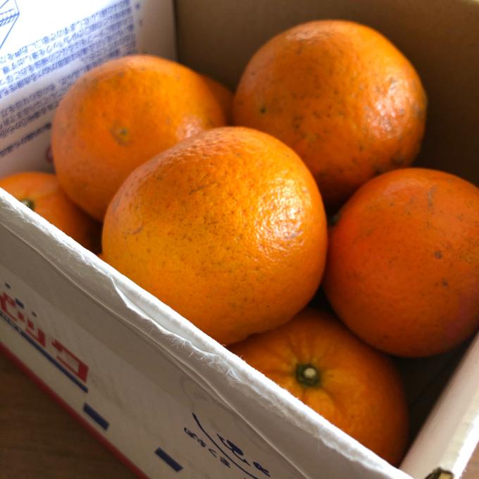 奄美大島のタンカンと 叶農園さんの黒糖_b0347858_20105595.jpg