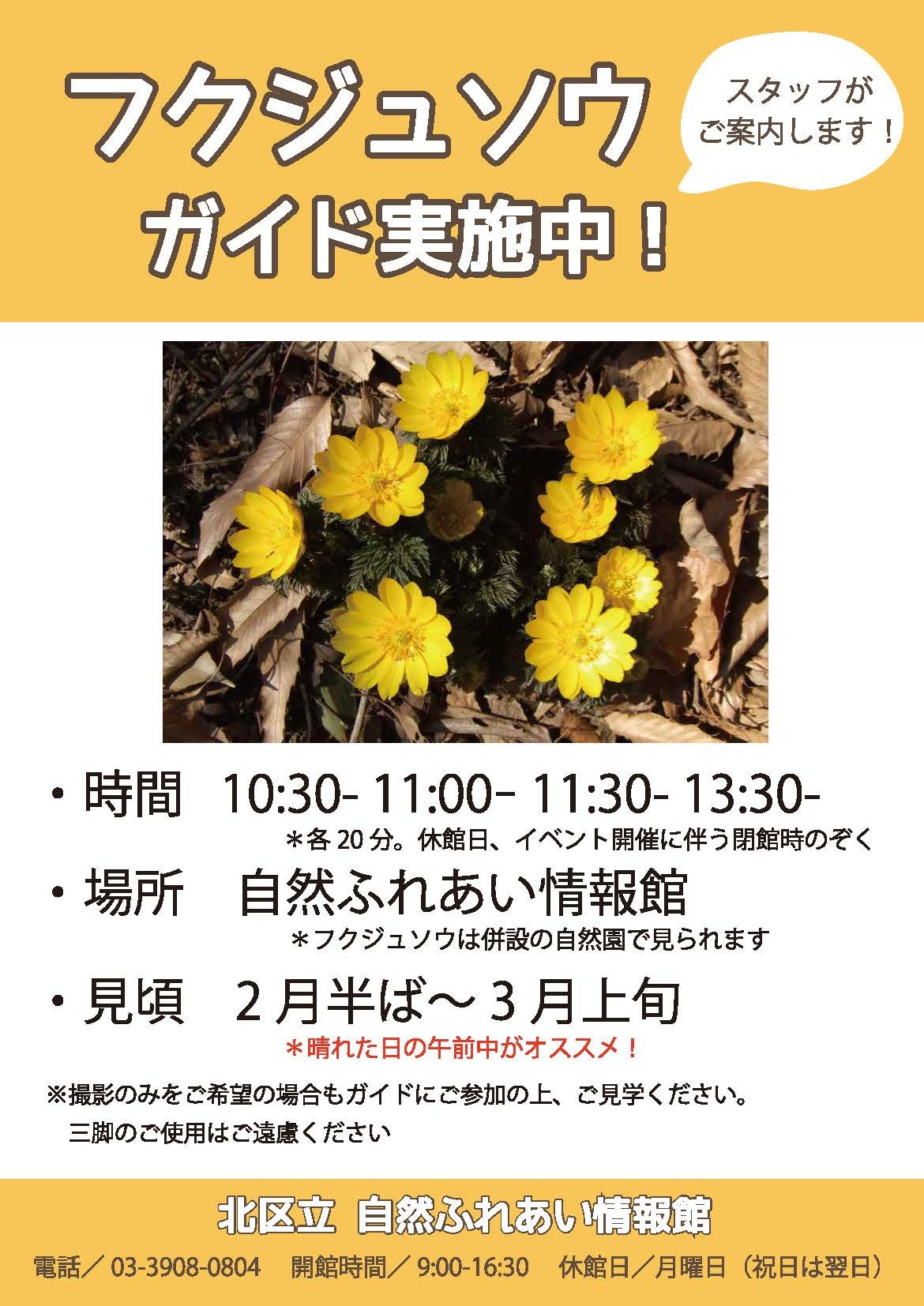 フクジュソウの開花が始まりました!_f0361087_12154044.jpg