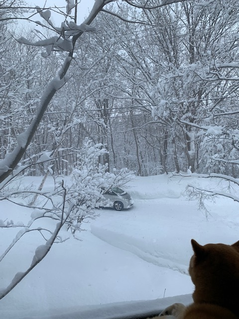 2月8日 月曜日 雪_f0210811_10380832.jpg