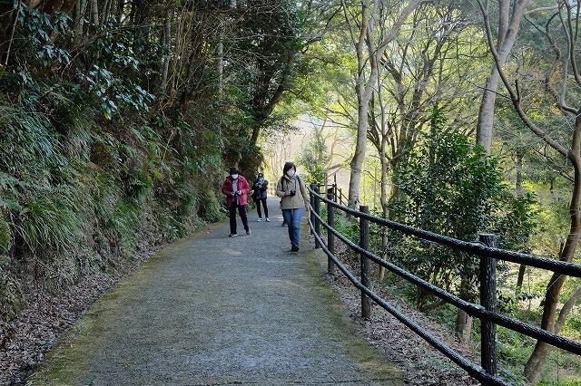 河津桜とペリーロード_f0221724_09454349.jpg