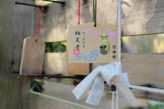 河津桜とペリーロード_f0221724_10020734.jpg