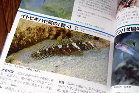 21.2.8 新版『日本のハゼ』_b0100730_19382898.jpg