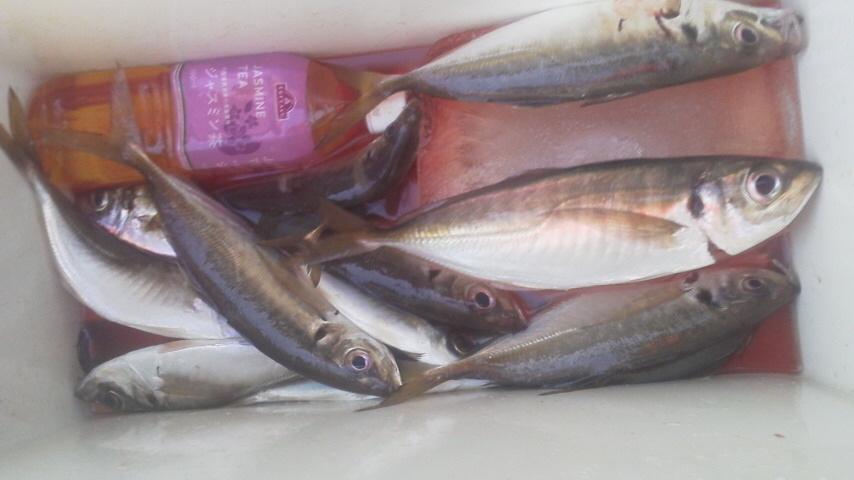 初釣りは黒じゃなくてアジ~_b0342642_12062345.jpg