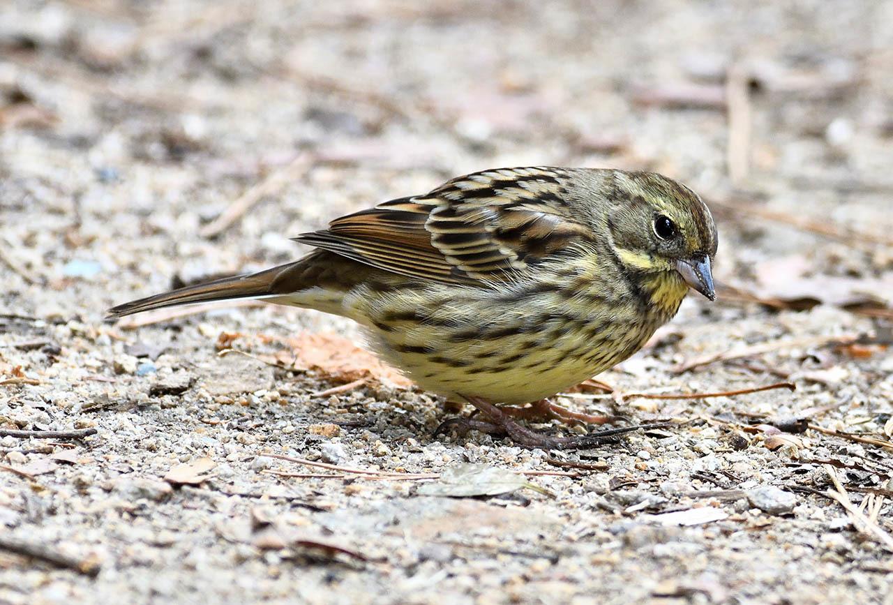 再度公園の野鳥_c0129047_20262320.jpg