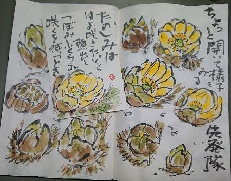 福寿草 咲くを待つとき_b0029182_17425184.jpg