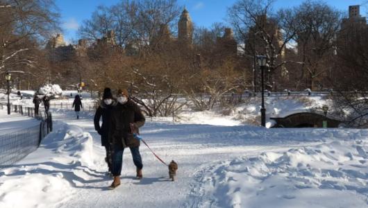 最近、雪また雪のニューヨーク、今週も来週も雪模様_b0007805_22023052.jpg