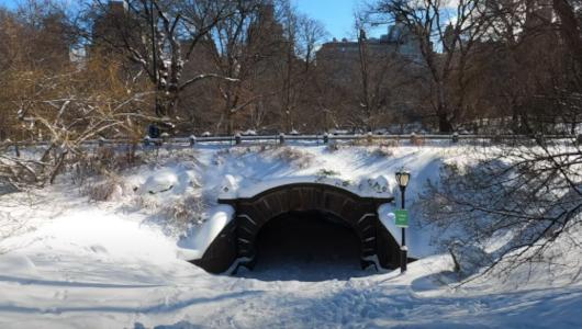 最近、雪また雪のニューヨーク、今週も来週も雪模様_b0007805_22065890.jpg