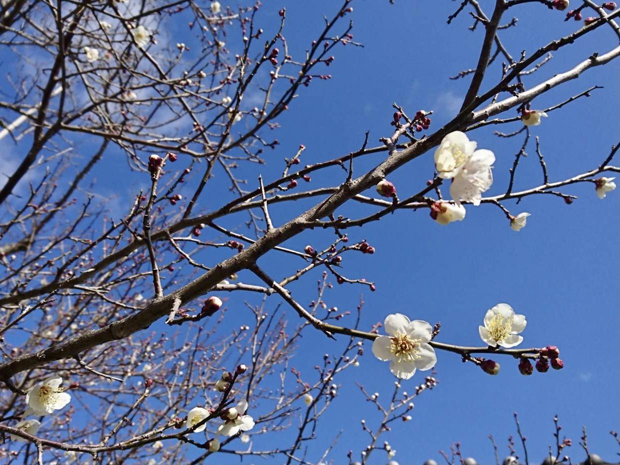 2月9日 自由活動日_c0239329_20370177.jpeg