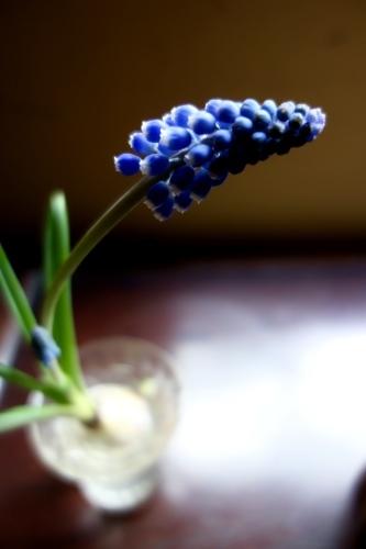 早春のガラス器_a0197730_10321737.jpeg